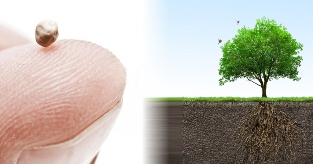 Pohon-Biji-Sesawi